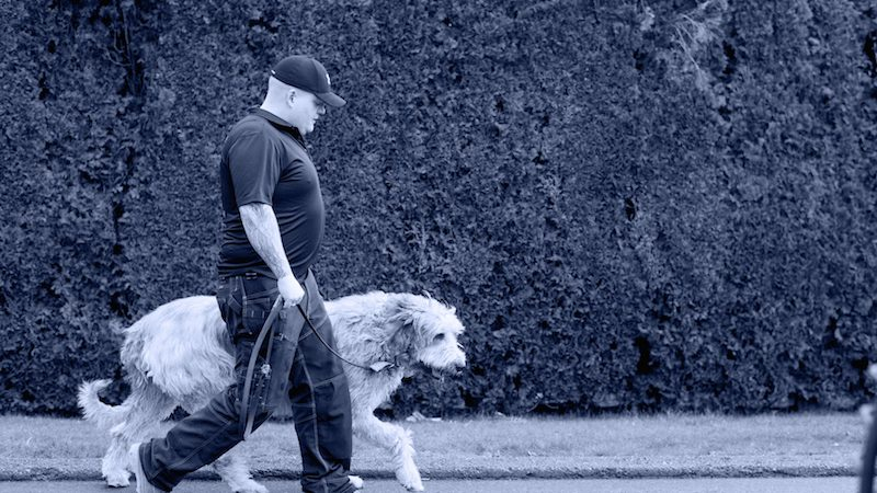 Superior Canine Training Inc. Head dog trainer Aaron Kemp conducting a dog training session with an on-leash large dog.
